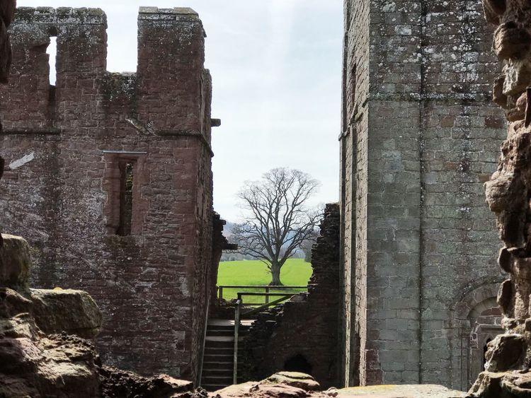 An oak amid ruins