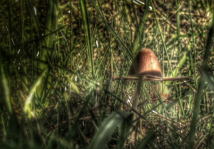 Mushroom Hunting EyeEm Nature Lover Macro Photography Out And About..
