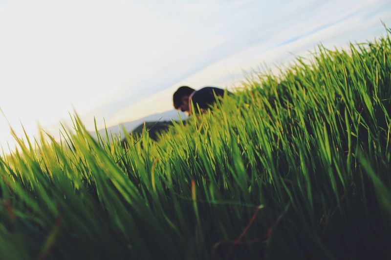 through the looking grass 🌾 Nature Focus On Foreground Grass Green Hiking Hills EyeEm Best Shots EyeEm Nature Lover EyeEm Masterclass EyeEm Best Edits Eye4photography  Golden Hour Exploring Low Angle View
