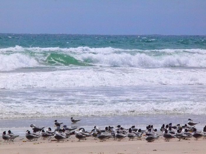 Beach Nature Power In Nature The Birds Wave