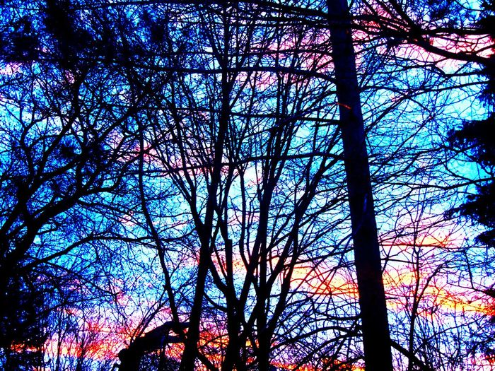 Bare Tree Beauty In Nature Blue Branch Low Angle View Nature Orange Color Outdoors Sky Tree Treetop Pembroke Ontario Canada
