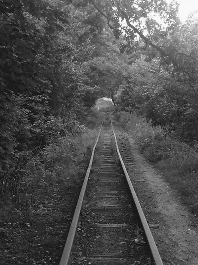 Black And White Friday Tree The Way Forward Forest Railroad Track Transportation Nature Rail Transportation Day No People Growth Beauty In Nature Outdoors Tranquility Straight Scenics