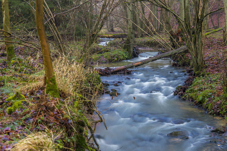 Hanfbach Bachlauf Buchholz Ww Creek Hanfbach Beauty In Nature Flowing Water Forest Nature Outdoors Tree Trunk Water Westerwald EyeEmNewHere