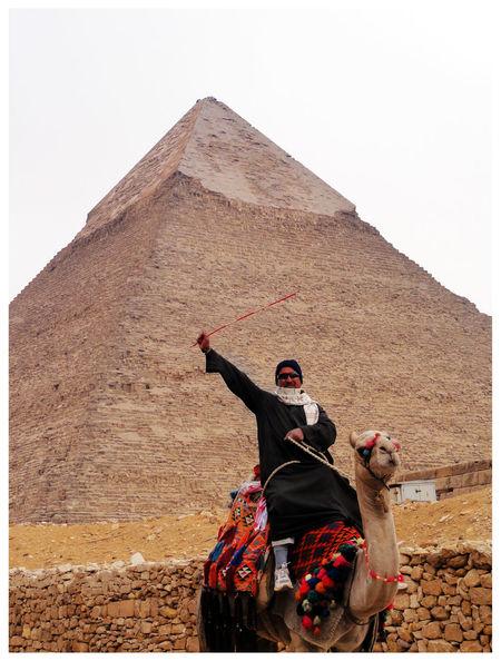 Camello Egipto Piramide Camel Egipt Egyptian Piramid