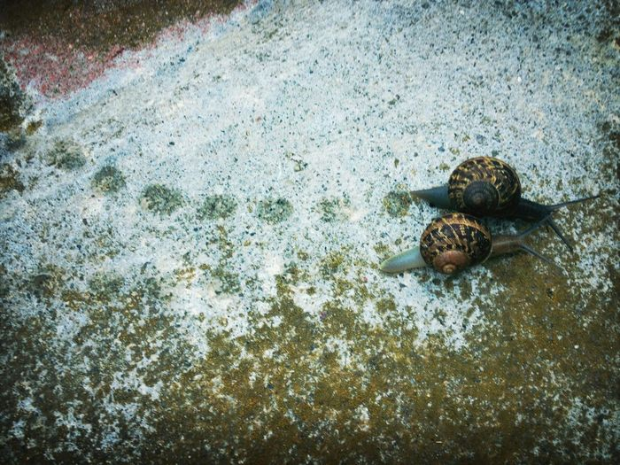 Close-up of two snails on ground