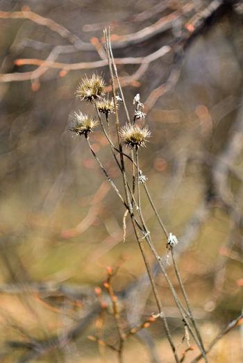 цветок  Outdoors Grass травы трава No People Flower Nature цветок