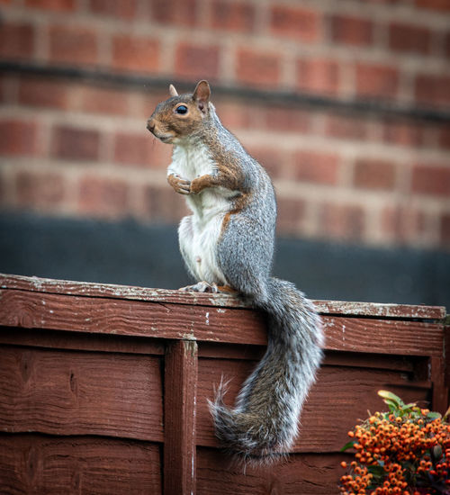 Squirrel sitting on wall