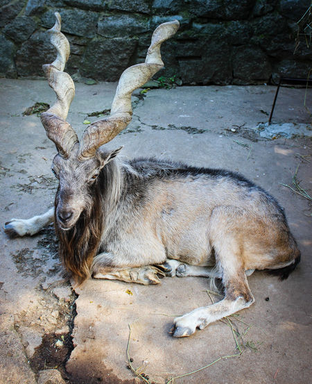 Animal Themes Animal Wildlife Animals In The Wild Antler Day Lying Down Mammal Nature No People One Animal Outdoors Relaxation