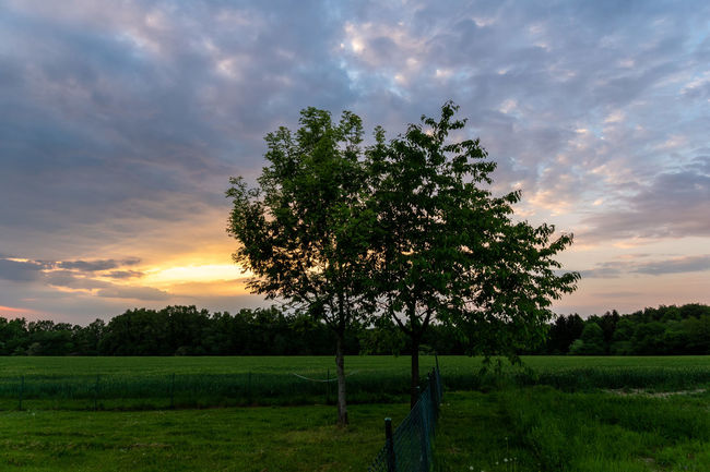 Beauty In Nature Cloud - Sky Environment Field Grass Green Color Growth Idyllic Land Landscape Nature No People Non-urban Scene Outdoors Plant Scenics - Nature Sky Sunset Tranquil Scene Tranquility Tree