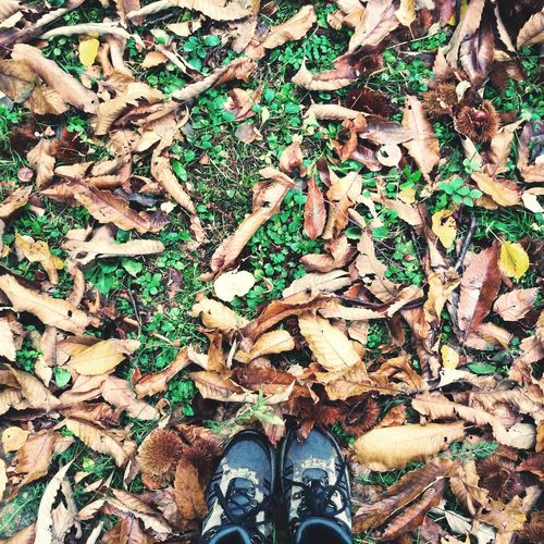 Autumn Autumn Colors Autumn Leaves Castagne Montagna Valtellina First Eyeem Photo Scarpe Shoes Io Me&thenature Love Silent Moment Silence Bellezzadellanatura Beauty In Nature Colori Silence Of Nature Bellezza Moment Colors Nature Outdoors Silenziodellanatura Ricordo