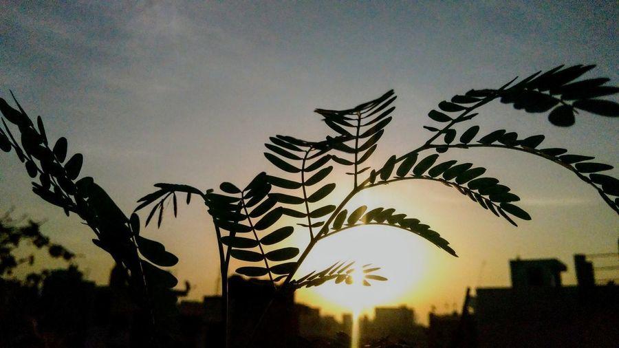 Life Plant Sun Brightstar Homestar Bluesky Morningshot Macroshot Life Nature