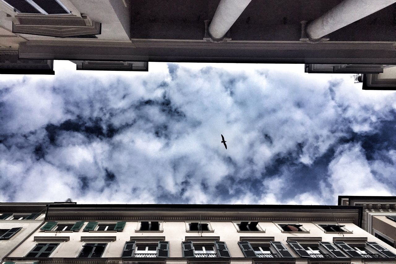 architecture, building exterior, built structure, cloud - sky, sky, bird, low angle view, flying, animal themes, building, vertebrate, no people, animal, day, nature, animal wildlife, one animal, animals in the wild, window, outdoors, directly below