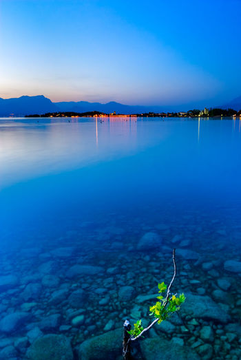 Blue dusk at lake Garda. Alps Beauty In Nature Blue Blue Sky Bottom Clear Sky Day Dusk Foreground Garda Italian Lake Leaves Mountain Nature No People Outdoors Plant Reflections Rocks Scenics Sirmione Sky Tranquility Water