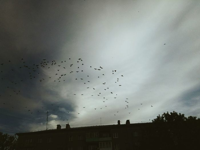 Large Group Of Animals Flock Of Birds Flying Bird Animals In The Wild Animal Themes Animal Wildlife Mid-air Sky Silhouette Migrating Nature Motion No People Outdoors Beauty In Nature Day City Summer Nature Beauty In Nature