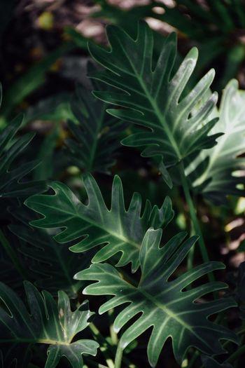 植物园 EyeEmNewHere Xiamen,China Leaf Plant Part Growth Plant Green Color Beauty In Nature Nature Freshness