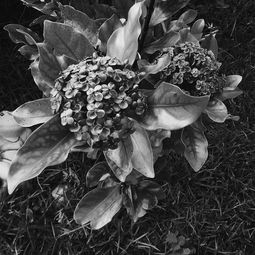 Nature Photography Nature_collection Plants Flowers,Plants & Garden Black & White Nature Plants And Flowers Love ♥ Black And White Flowers Naturelovers Beauty In Nature Plants Of Eyeem Blackandwhite