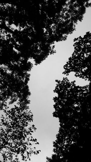 Nature Trees Black And White