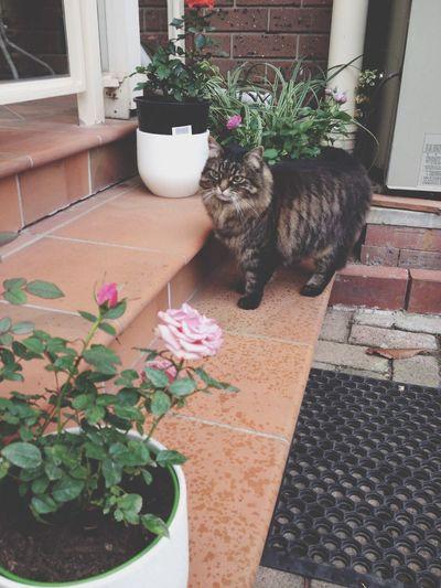 Cat Plants Pretty Love