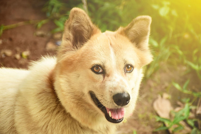 It smiled happily to me. Cute Pets Fun Funny Sunlight Animal Animal Themes Brigth Close-up Day Dog Face Dog Focus On Foreground Happy Anímals Looking At Camera Mammal No People One Animal Outdoors Pets Smile Smiling