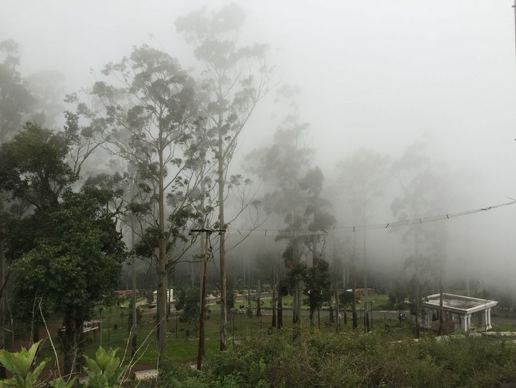 Tranquil Scene Cloudy India Tamilnadu Yercaud Eastern Ghats Foggy Misty