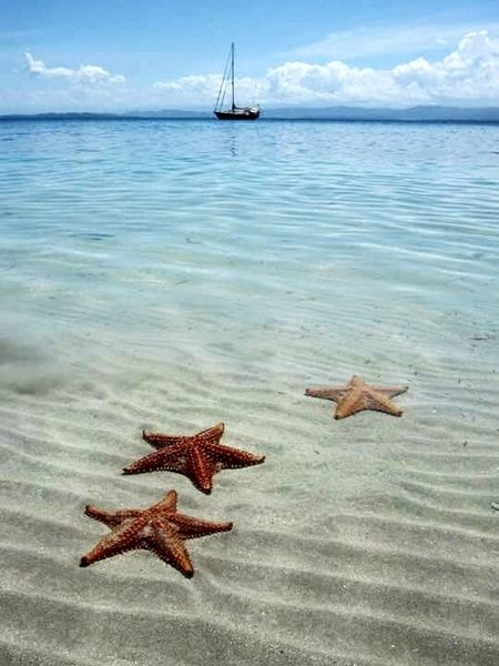 Starfish Beach First Eyeem Photo