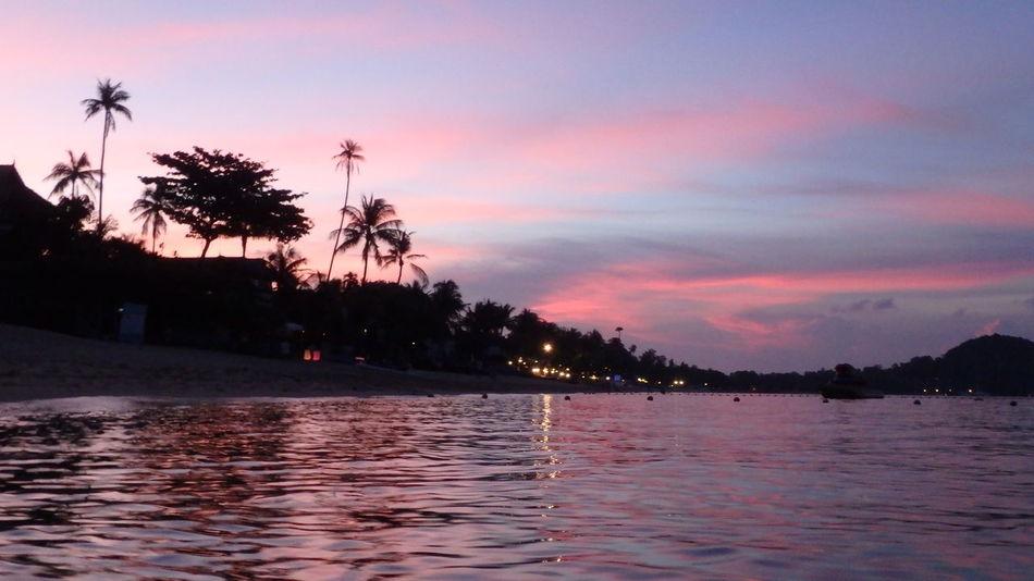 Sunset Tree Water Sky Sea Pink Color Nature No People Kosamui Thailand Travel