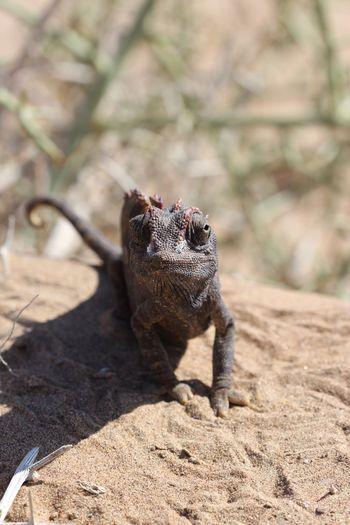 Chameleon EyeEm