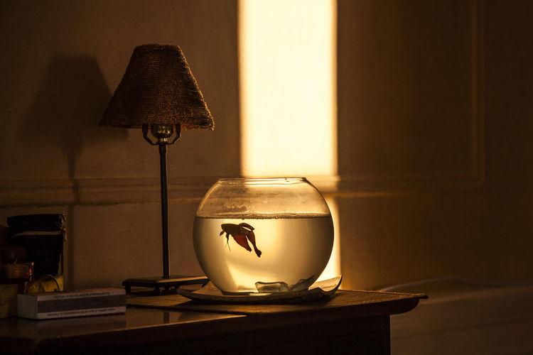 Acuario Aquarium Betta Fish Cozzy Day Electric Lamp Fish Heat - Temperature Illuminated Indoors  Luz Cálida New York No People Nueva York Pecera PEZ Pez Betta Round Aquarium Side Table Sunset Silhouettes Surviving Table Warm Colors Warm Light Water
