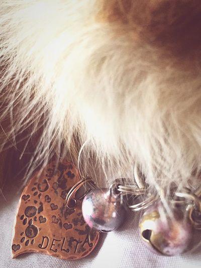Dog Australianshepherd EyeEm Animal Lover Puppy Dogtags Custom Etsy Delta Copper  Heart