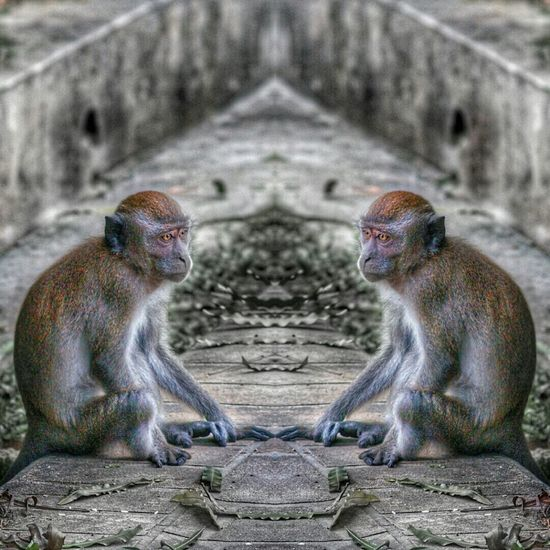 Mirrorimage Mirroring Monkeys EyeEm Best Edits Edited Photo Editing My Edit Doubletrouble Eye4photography  EyeEm