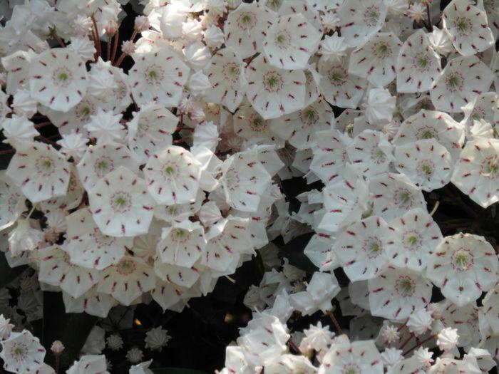 花 はな はな 白い 白 植物