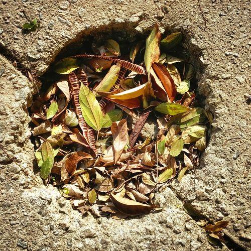 Folha Folhas Que Caem