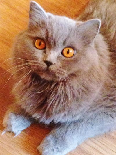 My Cat Catsagram I Love My Cat Cat