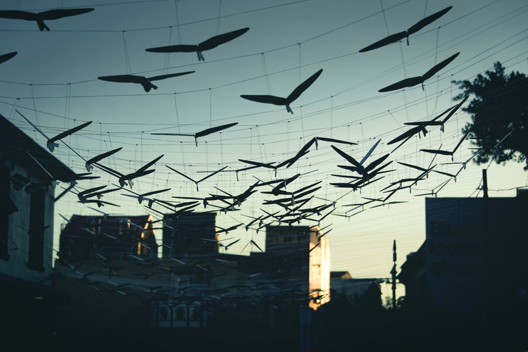 Into the dawn Animal Themes Architecture Bird Building Exterior Built Structure City Day Flying Low Angle View Nature No People Outdoors Silhouette Sky Sun Sunset