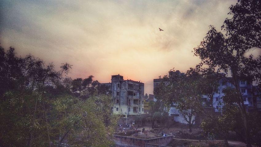 Bird Tree Flying City Sunset Sky Animal Themes Architecture Building Exterior Cloud - Sky