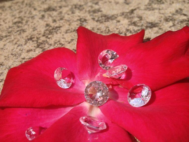 Diamonds on a rose petal Diamonds Diamonds Are A Girl's Best Friend Flower Flower Head Fragility Ice Love Petal Pink Color Red Romance Rose - Flower Sparkle Sparkling