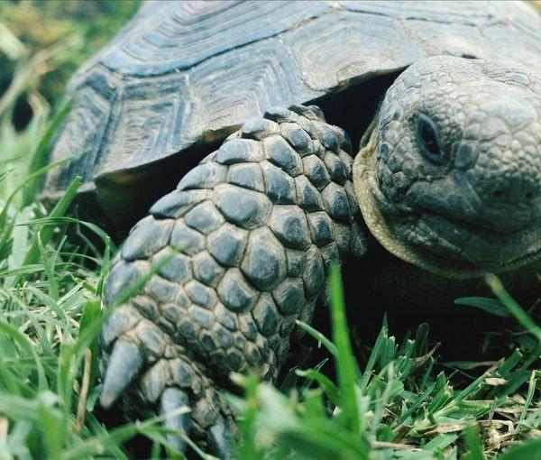 JAAAAAACK!!! Eye Em Best Shots Desert Tortoise Popular Photos