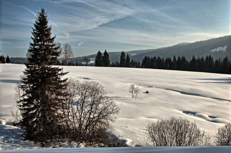 Modrava Snow ❄ Winter Winter In Šumava Winter Landscape Wintertime Beauty In Nature Cold Cold Temperature Day Landscape Nature No People Outdoors Scenics Sky Snow Tranquil Scene Tranquility Tree Weather Winter Winter_collection Šumava Šumava Bohemia