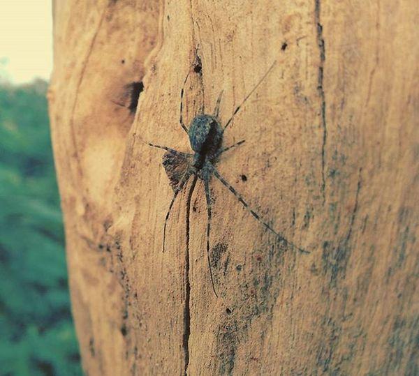 Spider Tree Shelter