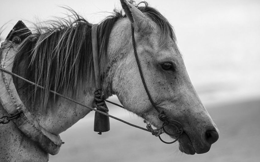 horse Blackandwhite Photography Horse Animal Themes Animals In The Wild Portrait Potrait_photography Bw Animal