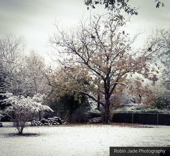 Snow in Texas 2017 Snow Snow Covered Texas Snow Texas Beauty Nature Day No People Outdoors Tree Sky Beauty In Nature Shades Of Winter
