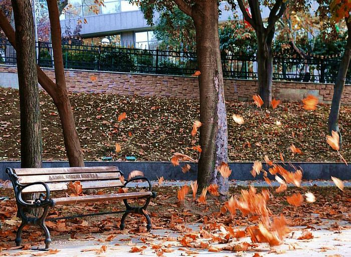 Autumn Beauty 😉 Autumn Autumn Colors Fine Art Photography Beatyinnature Istanbul Turkey Beşiktaş Yıldızpark