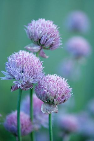 Summer moods Flower Purple Nature Plant Fragility Focus On Foreground Springtime Growth Beauty In Nature Freshness Close-up Blossom Flower Head Outdoors No People Wildflower Thistle Day Beautiful Scenery Beautiful Day Fairytale  Tranquility Pink And Green Beautiful Colors Nature