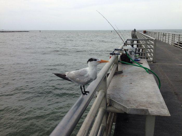 My fishing partner