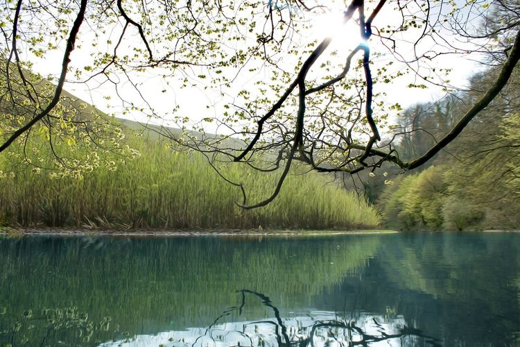 Happy Easter everyone 🐰⛪ Water Lake Reflection Tree Nature Beauty In Nature Growth Outdoors Tranquility No People Scenics Day Sky Branch Monsal Trail Art Is Everywhere