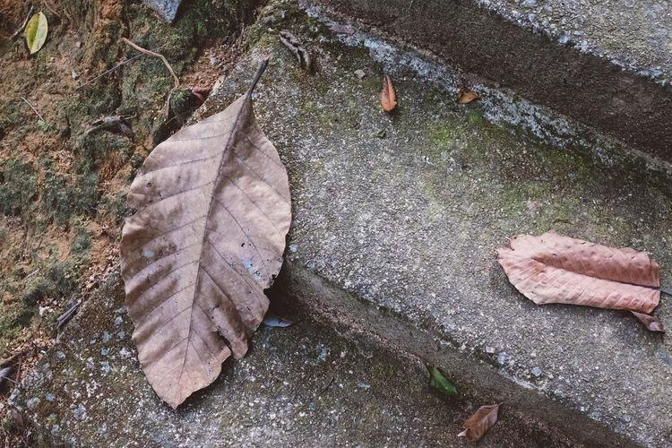 Malaysia Leaves Nature