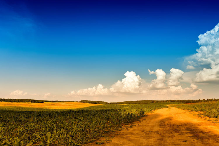 Scenic view of field against blue sky