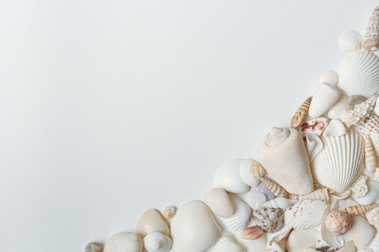 Directly above shot of seashells on table against white background