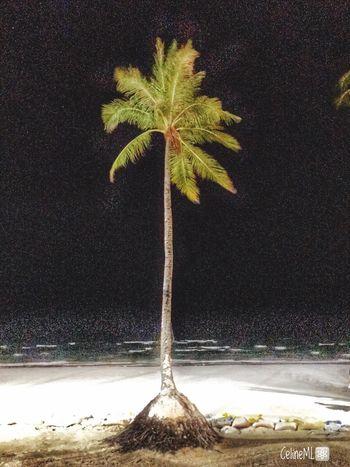 Coconut Tree Beachphotography Lind Nightphotography