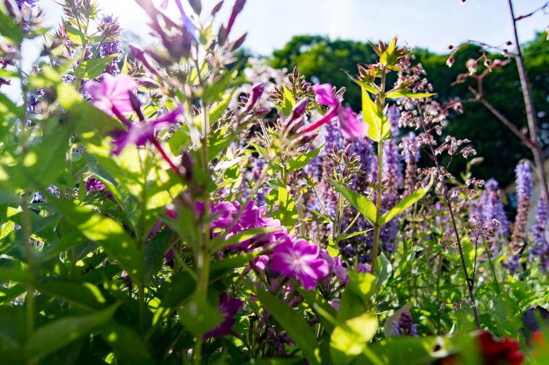 garden Flower Flowers Garden Green Meddle Plants Purple Spring Summer